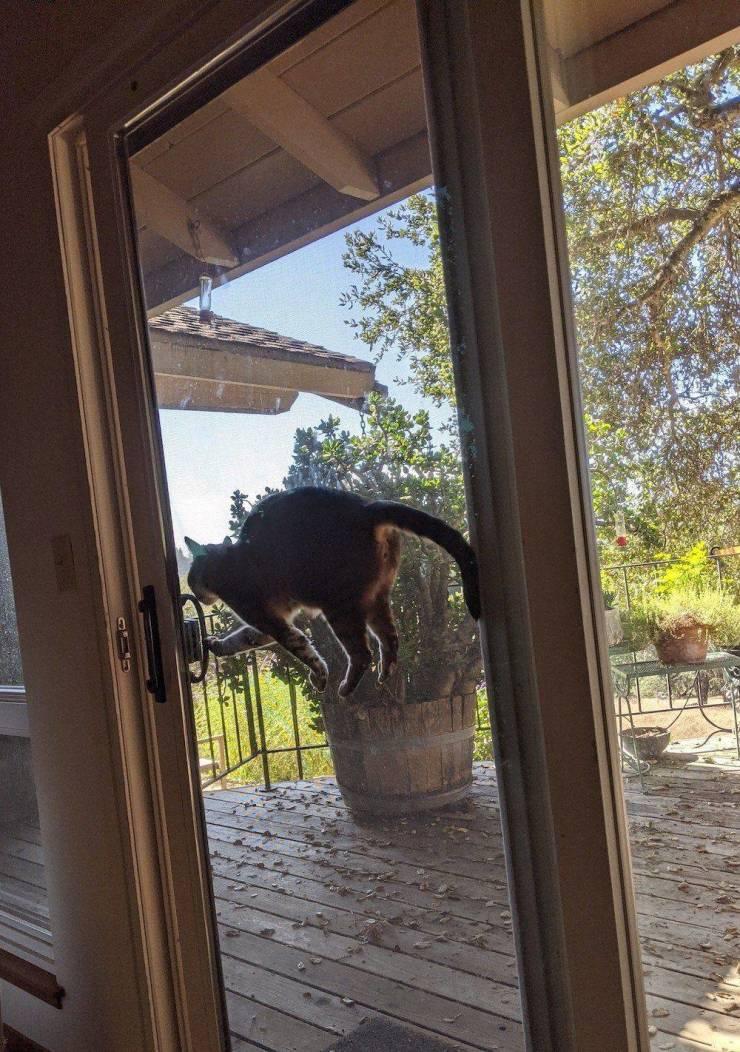 Кот застрявший в дверях