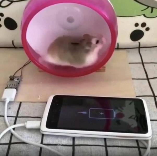 Хомяк заряжает телефон