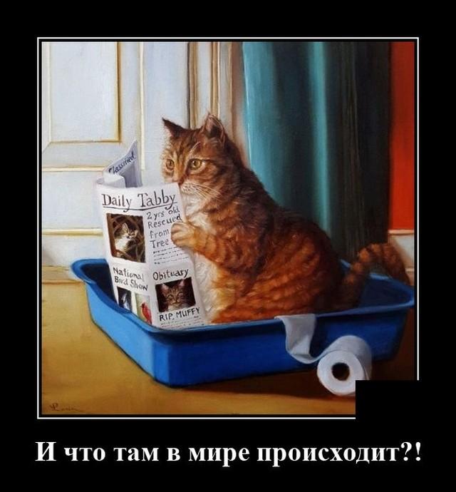 Демотиватор про кота и события в мире