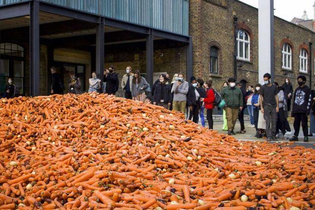 Морковь возле студентов