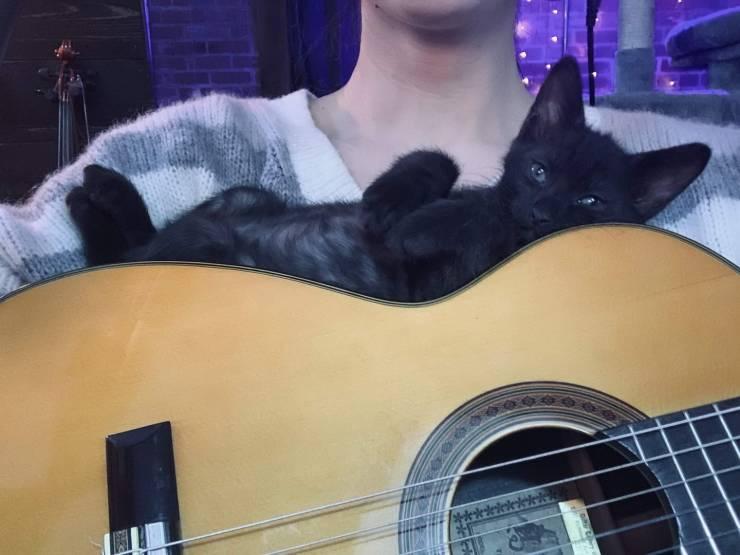 Котик лежит на гитаре