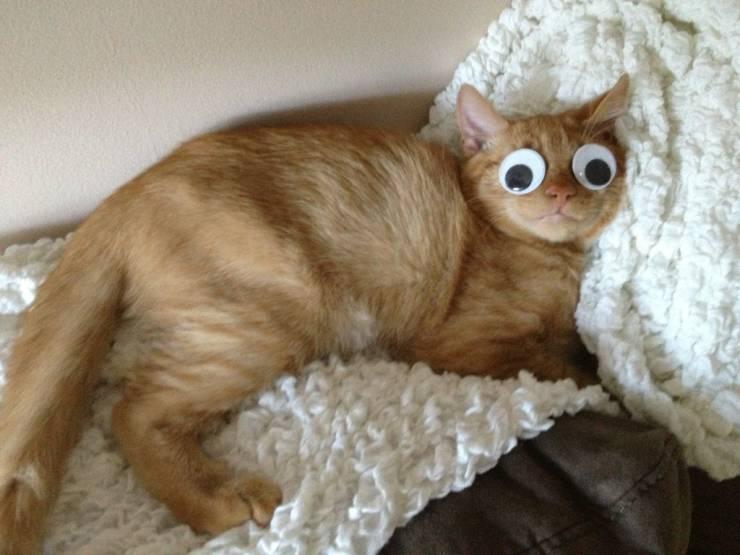 Кот с глазами-наклейками