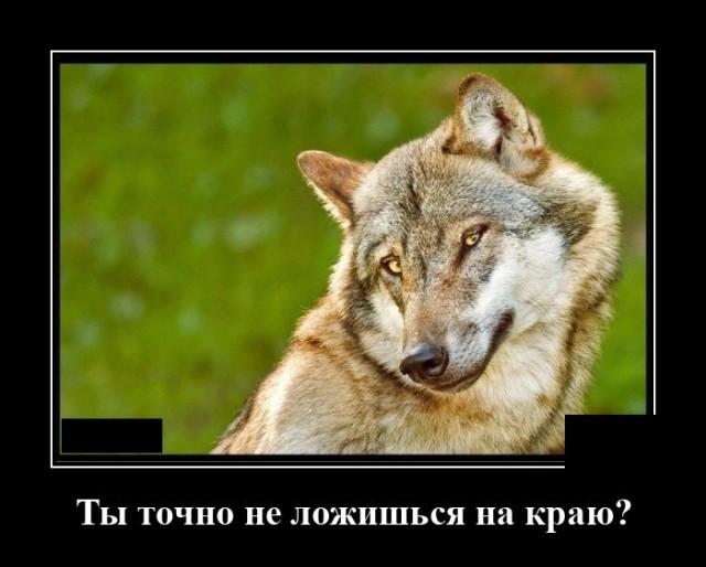 Демотиватор про волка