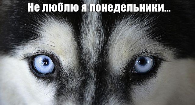 Трынделка - 05.10.2020