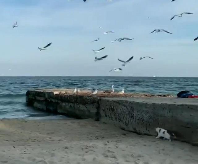 кот охотится на пляже