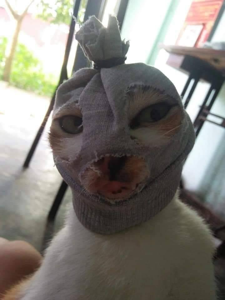 Кот с носком на голове