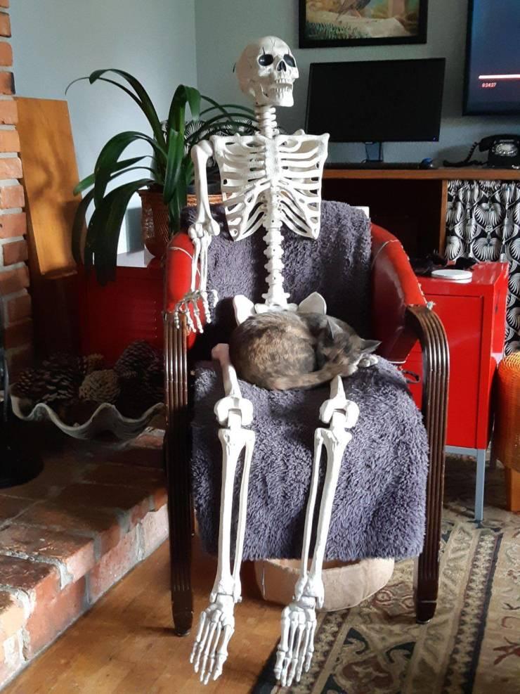 Кот спит на скелете