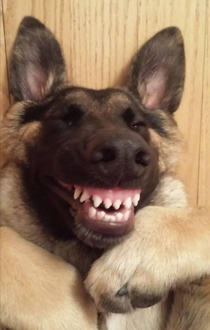 Смеющийся пёс