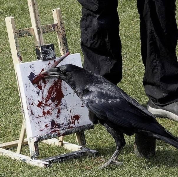 Ворон рисует картину