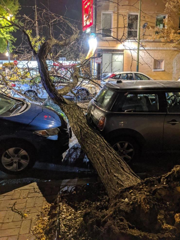 Везучие владельцы автомобилей и упавшее дерево