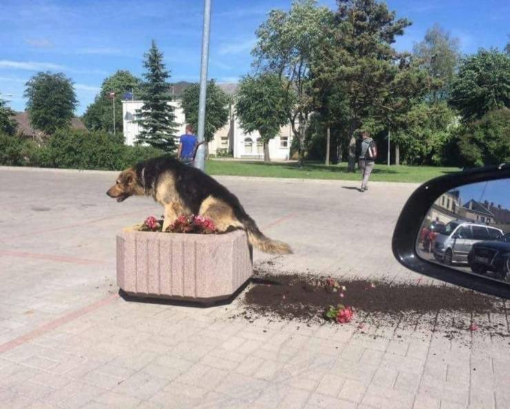 Собака копает клумбу