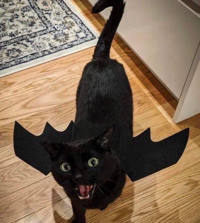 Кот с крыльями дракона