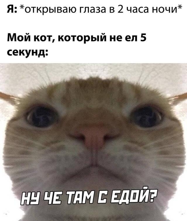 Кот, который не ел