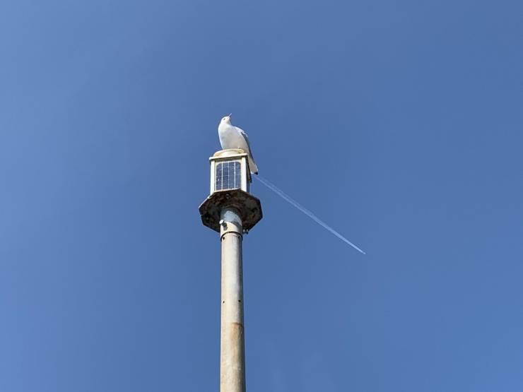 Чайка и самолет