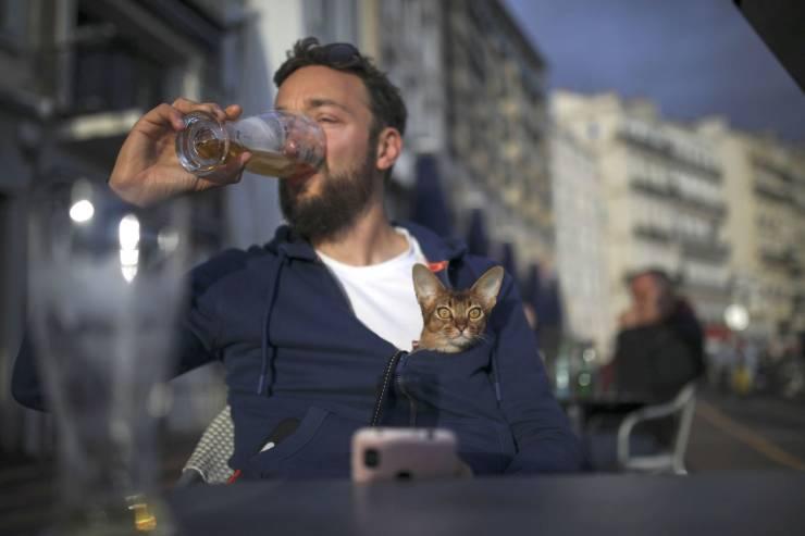Котик за пазухой