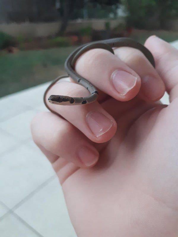 Крохотная змея