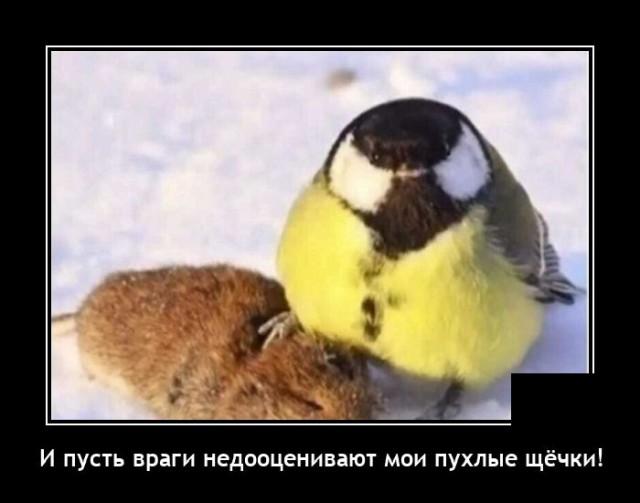 Демотиватор про птиц