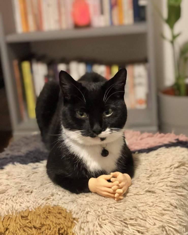 Кот и лапки