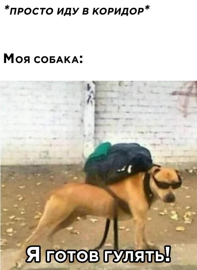 Собака хочет гулять