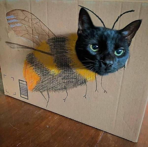 Кот-шмель