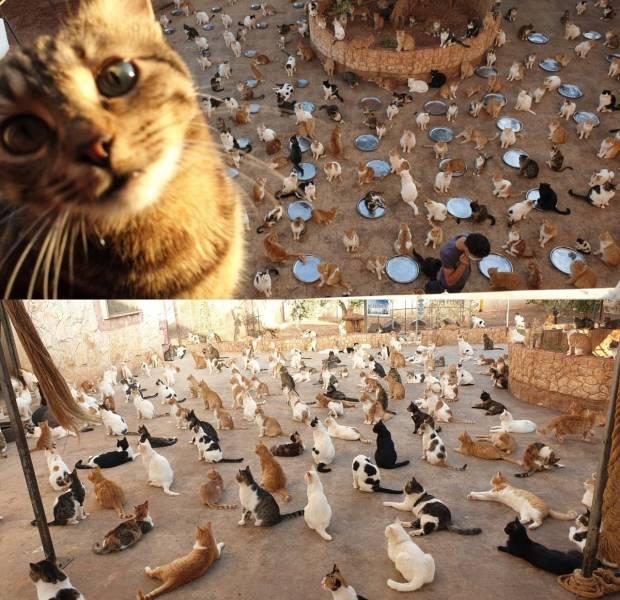 Множество котов