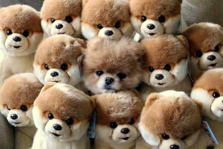 Собака и мягкие игрушки