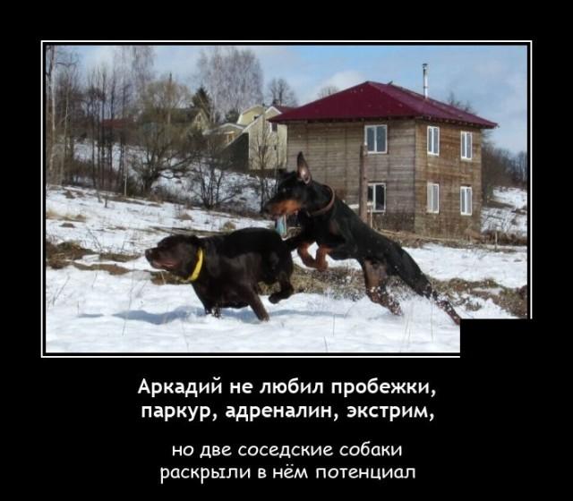 Демотиватор про без от собак