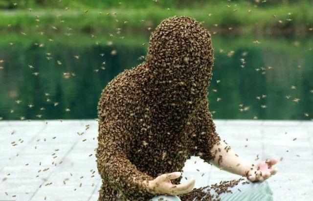 Жуань Лянмин покрытый пчелами
