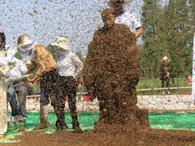 Жуань Лянмин и 63 кг пчел