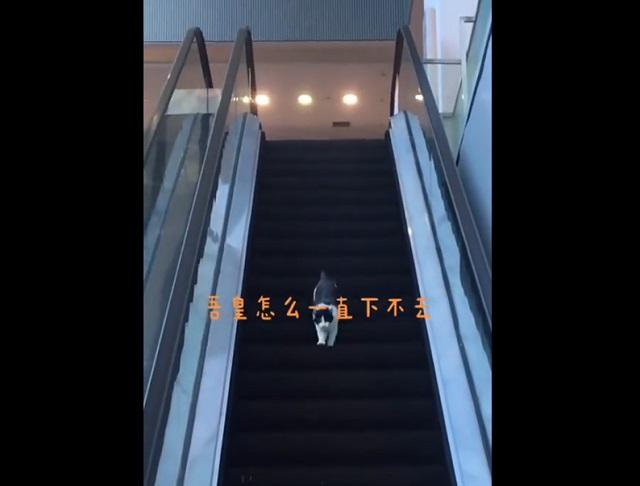Кот на эскалаторе