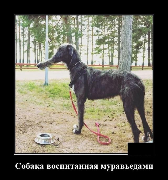 1603982426_demotivatory_12.jpg