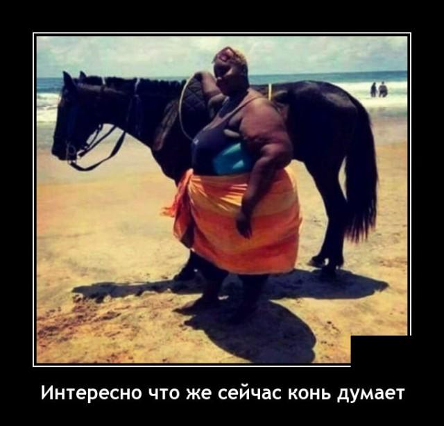 Демотиватор про коня