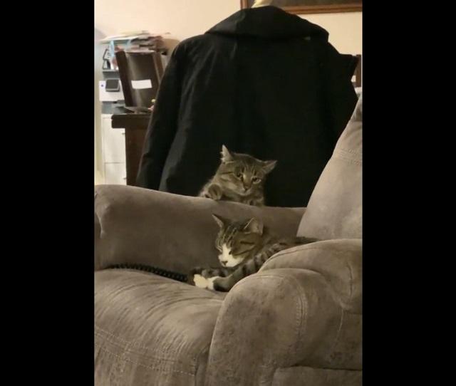 Коты на кресле