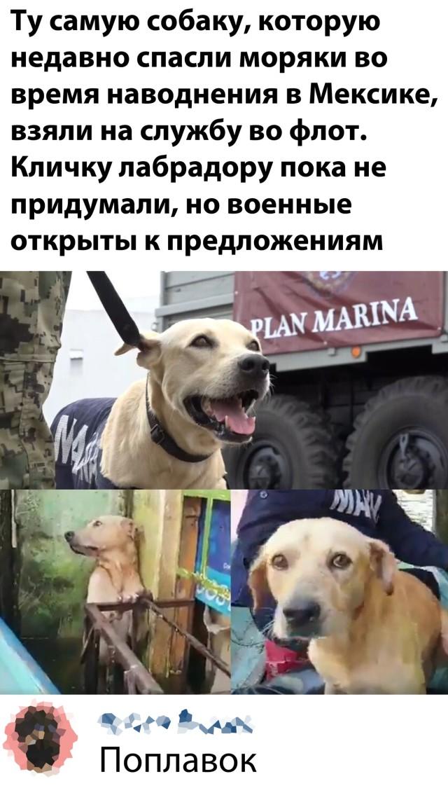Собака на службе