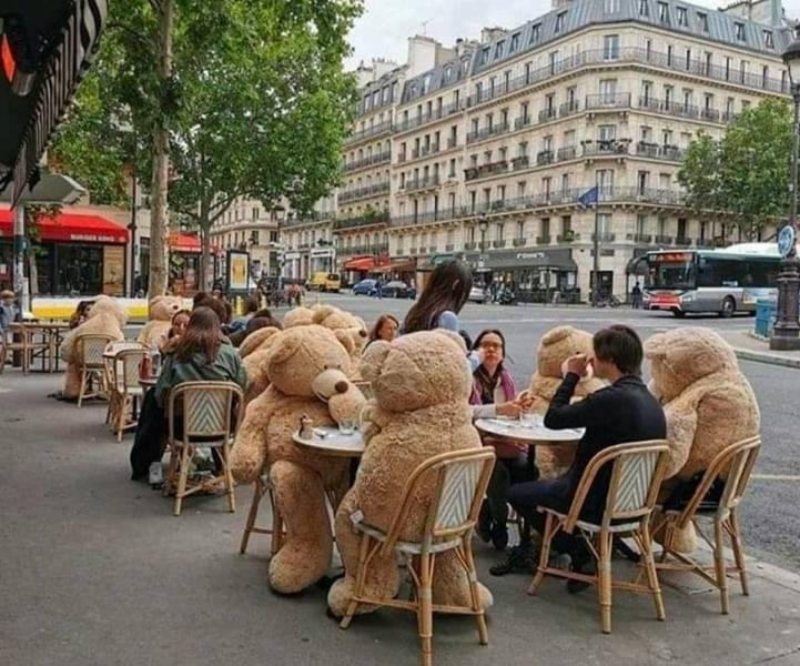 Кафе с медведями