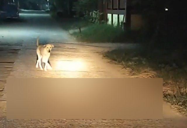 Собака в Таиланде