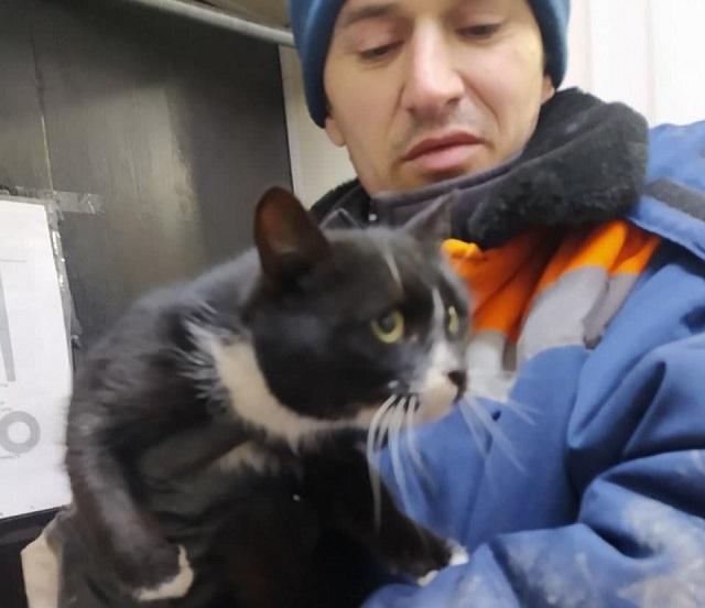 В Ульяновске спасли кота