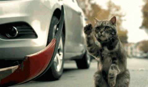 Кот паркует авто