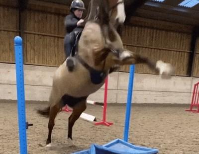 Испугавшийся конь