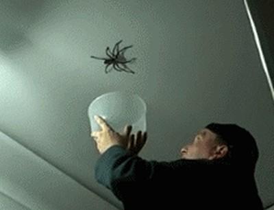 Попытка поймать паука