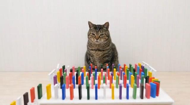 кот и домино