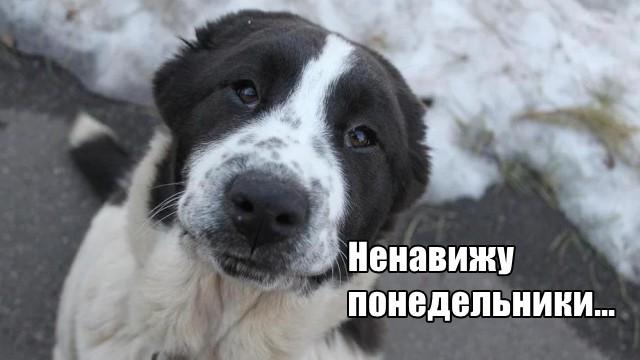 Трынделка - 01.02.2021