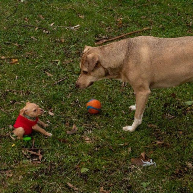 Собаки на газоне