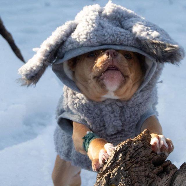 Собака в капюшоне