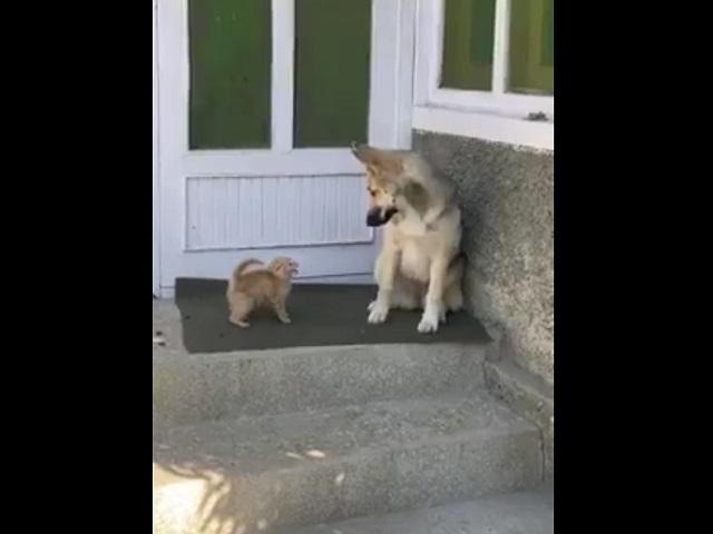 Котенок и пес