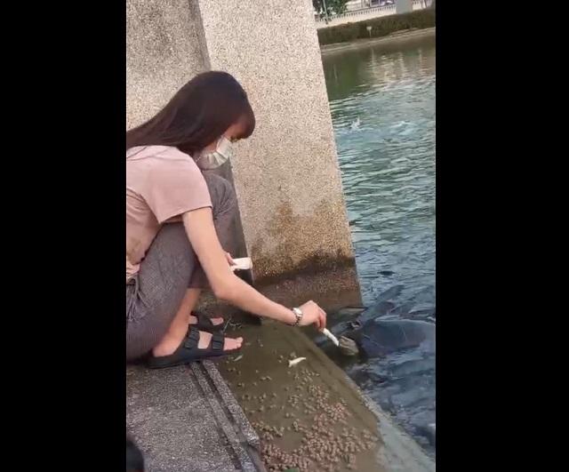 девушка кормит черепах