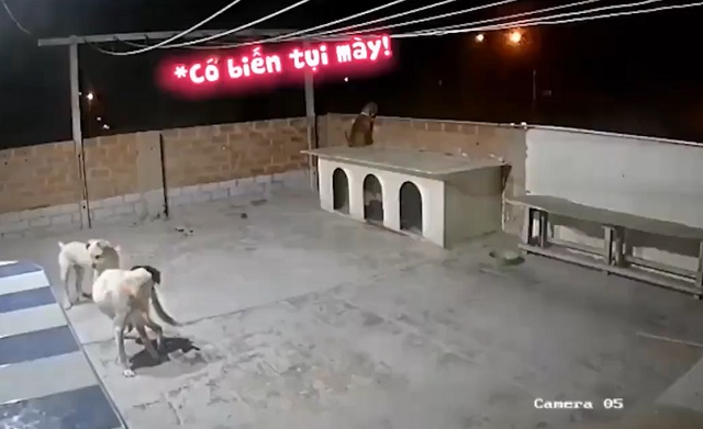 Собаки на крыше