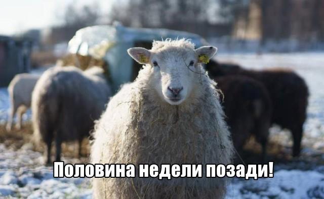 Трынделка - 03.03.2021