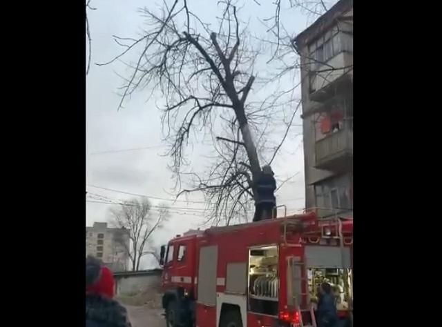 Пожарные снимают кота