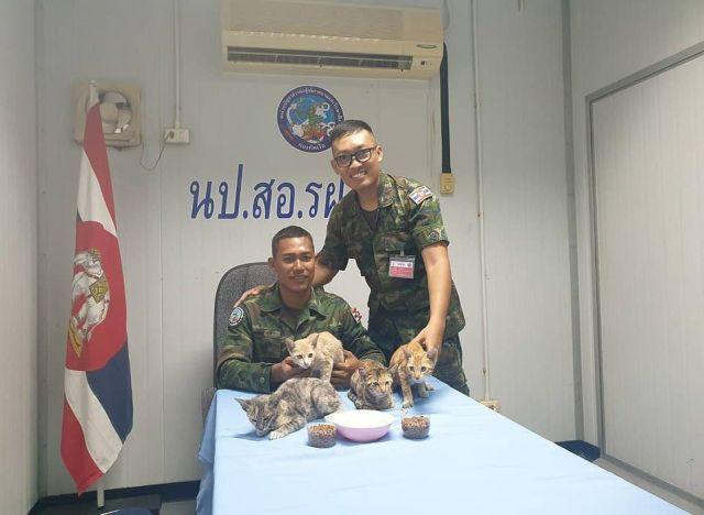 Спасенные коты в командном пункте